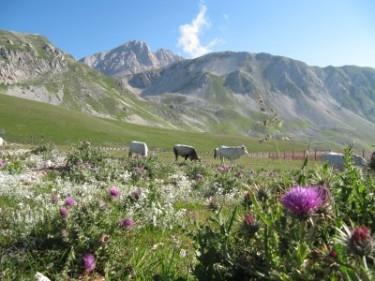 2-Anfahrt zum Corno Grande (2)